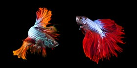 Steps For Acclimating Your Aquarium Fish