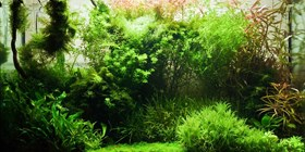 Basic Requirements for Growing Live Aquarium Plants