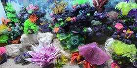 Artificial Coral and Plant life for saltwater habitats