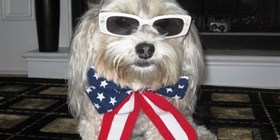 Cool 4th of July Dog